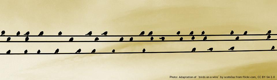 linia energetyczna i ptaki